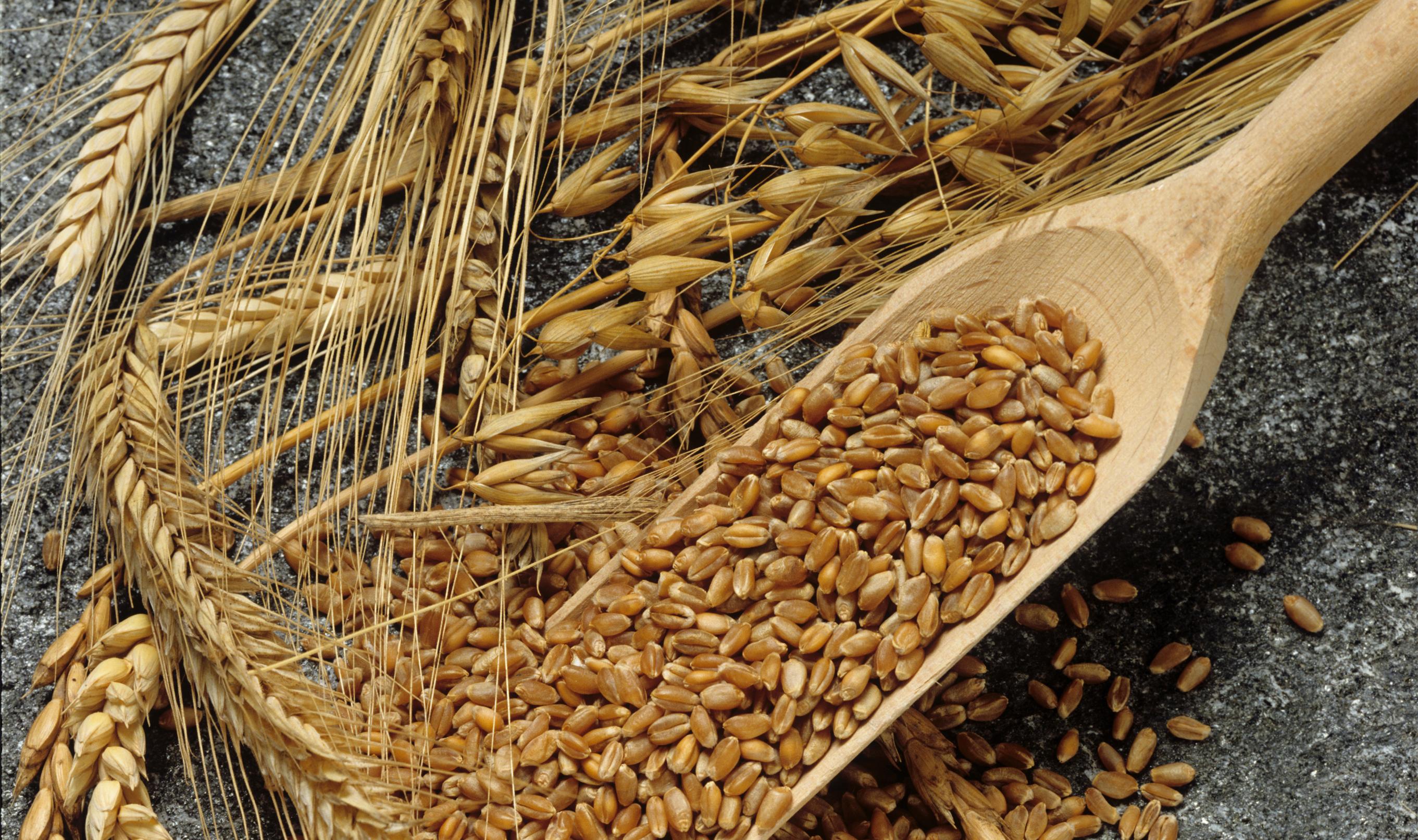 Getreide_Löffel